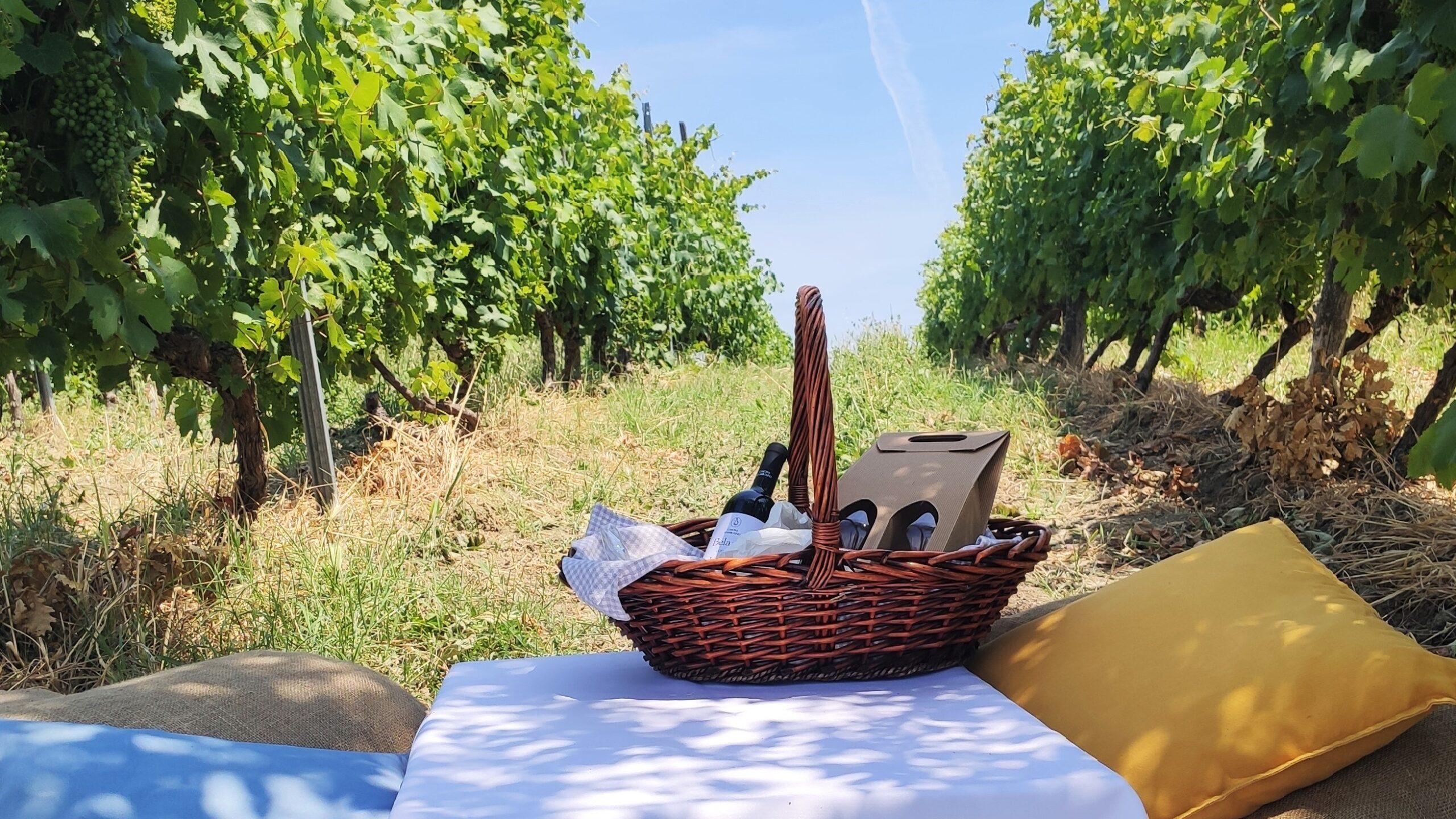 picnic in vigna colli tortonesi cascina giambolino