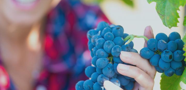 giovanna rosanna caruso minini vini sicilia degustazione storia