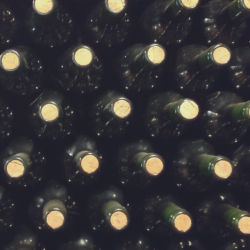 produttrici vite storie di vino e di donne