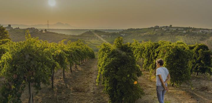 valentina di camillo i fauri degustazione vino rosso montepulciano