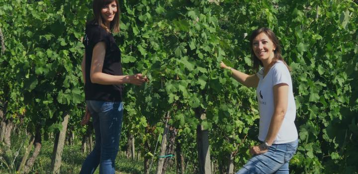 degustazione pinot grigio oltrepo pavese le fiole vini